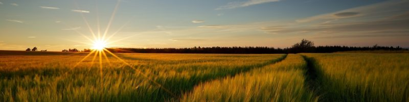 Waving wheat sunrise image